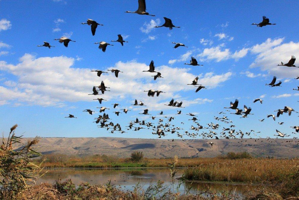 все перелет птиц в картинках предполагает разбивку