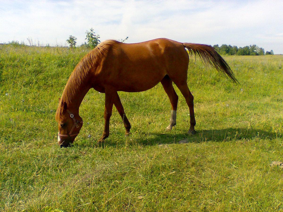 картинки конь на лугу котелки