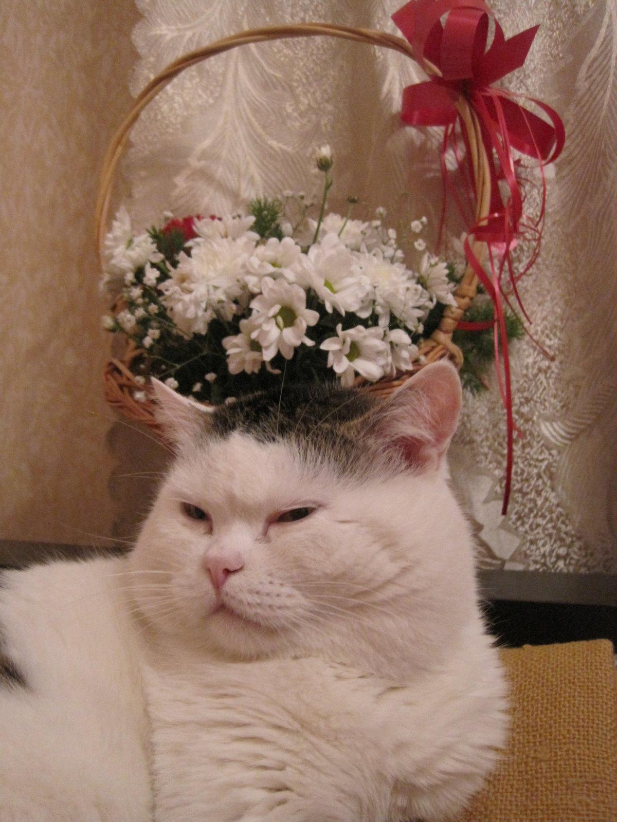 Ржачные коты фото с розой