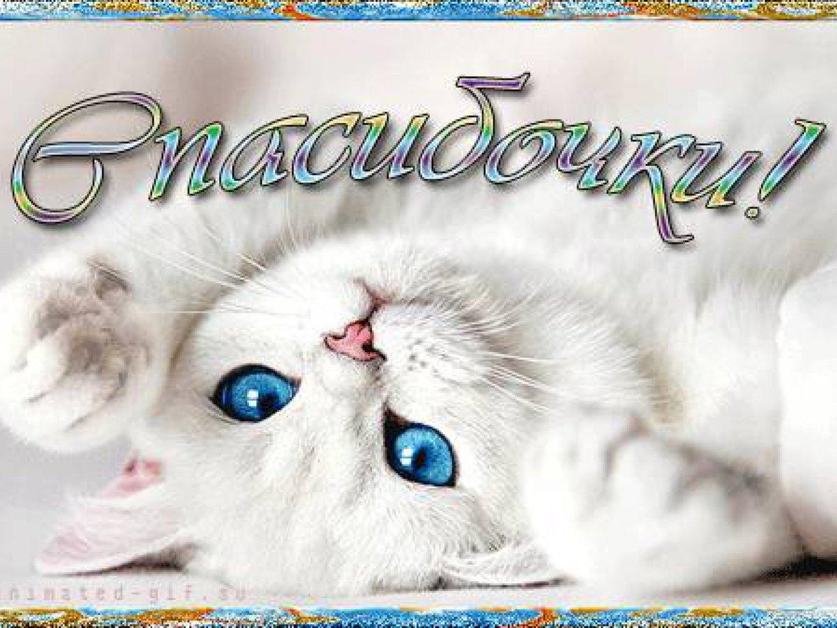 Своими руками, картинки спасибо с кошками красивые