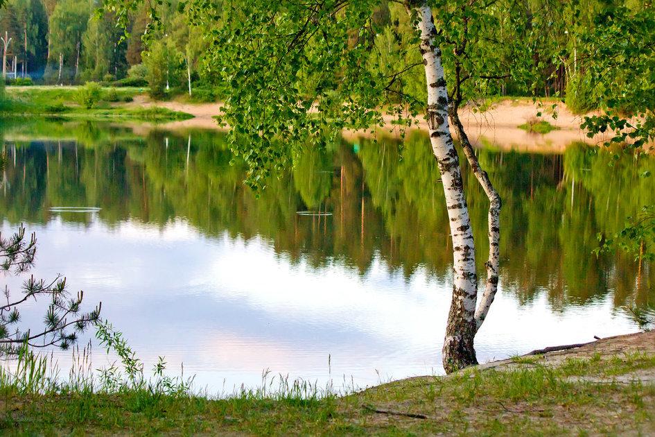 фальш-камин себя березка у пруда фото погода