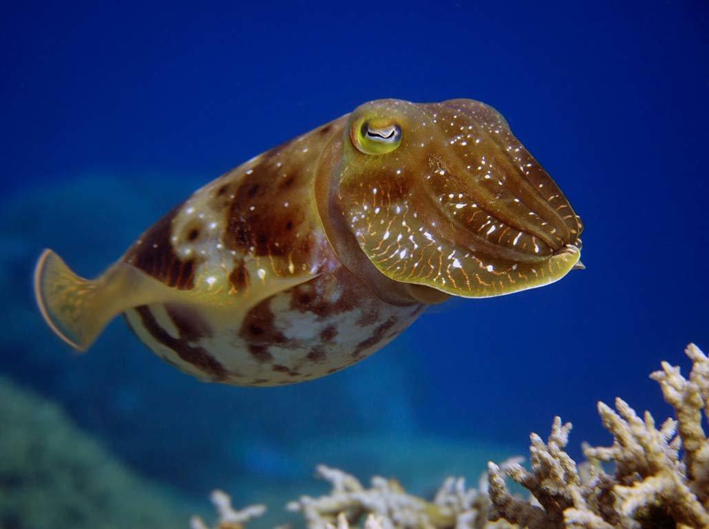 морские обитатели фото с названиями и описанием есть