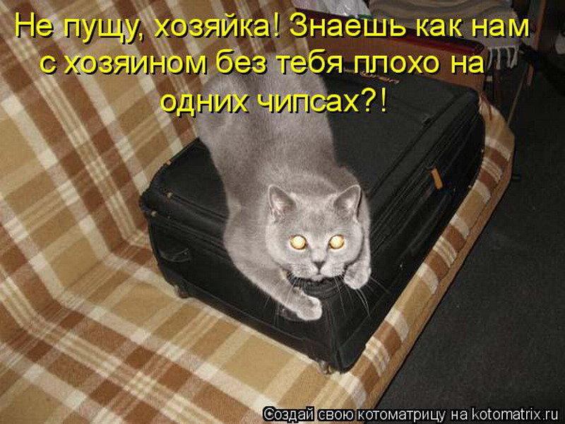 Днем молодежи, картинки про кошек с надписями смешные до слез на весь экран