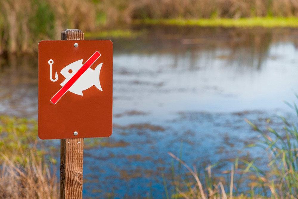 Новый закон о рыбалке вступает в силу с 1 января 2020 года Что будет