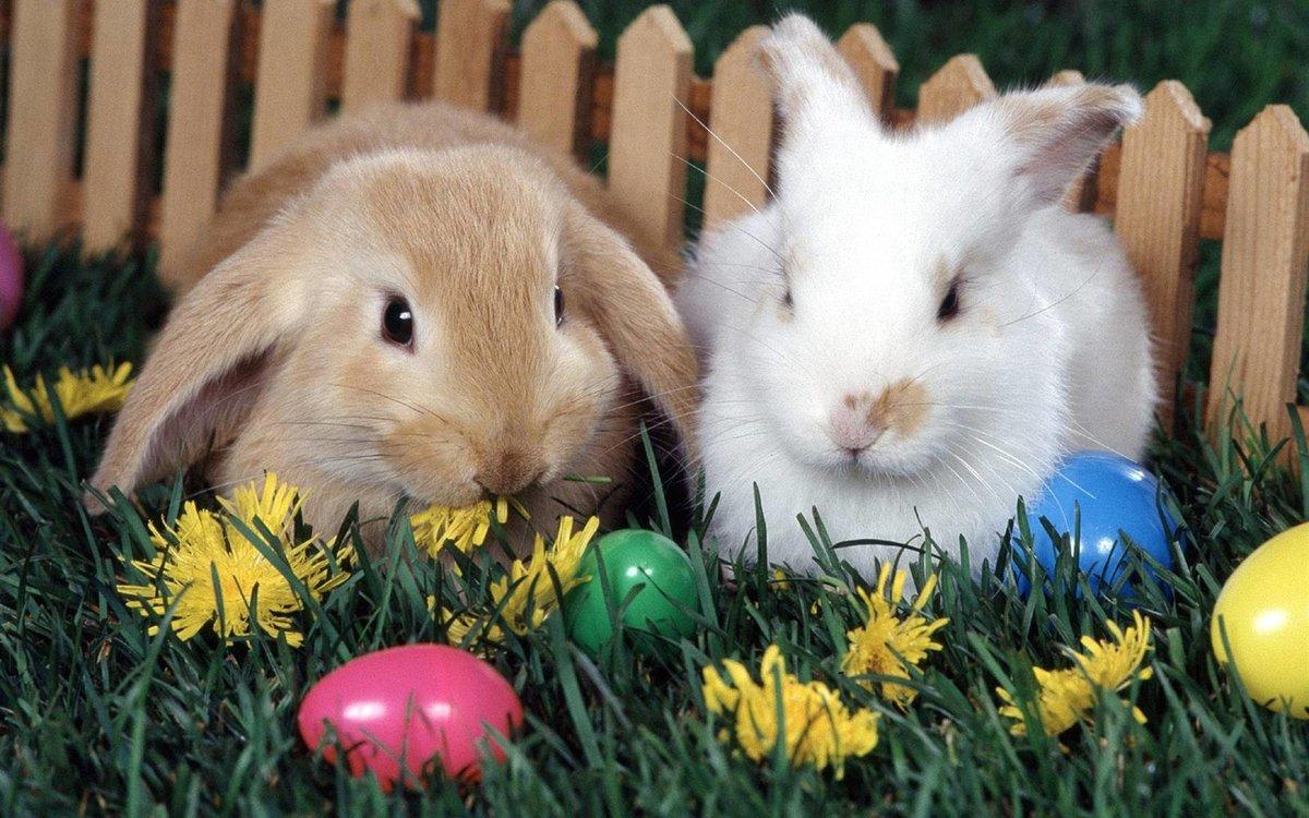 Стич открытка, картинки зайчатами