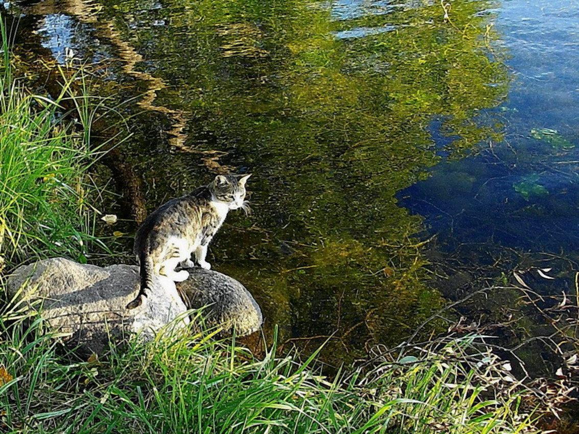 Картинки животные пруда
