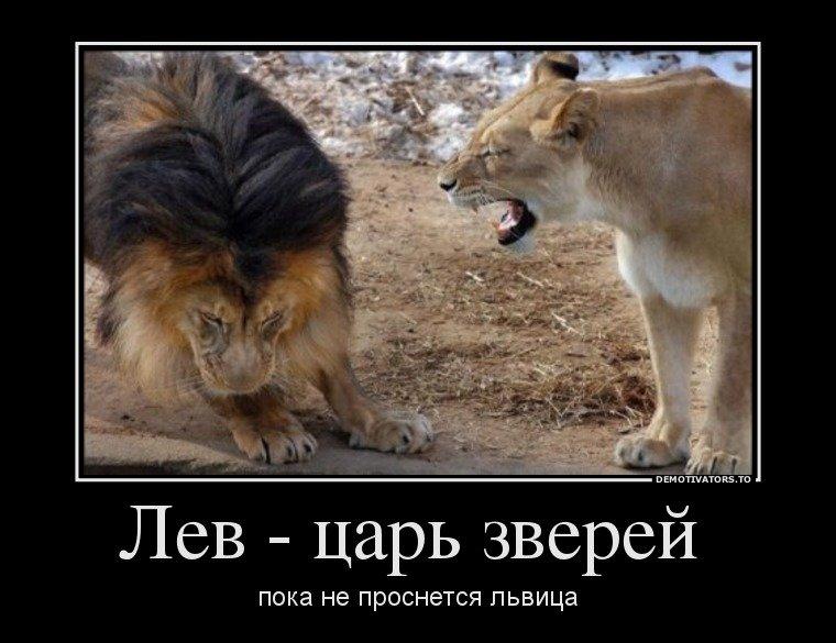 Аппликация, прикольные картинки со львом с надписями