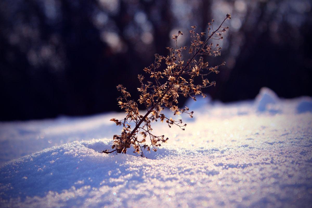 фото пейзажи зима снег макро деликатных материалов