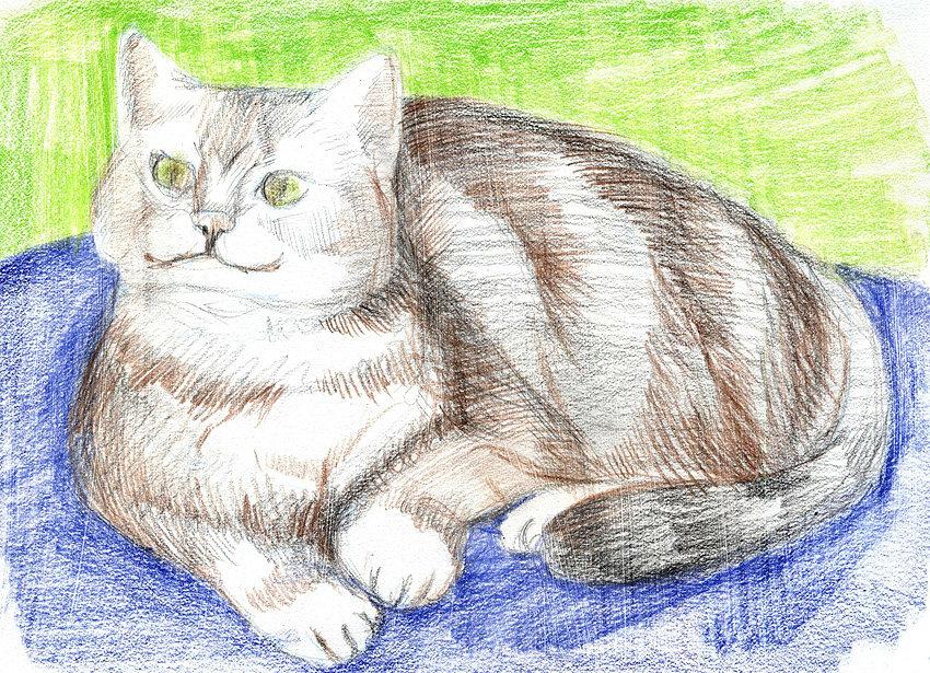 рисунки животных домашних карандашом пирога капустой