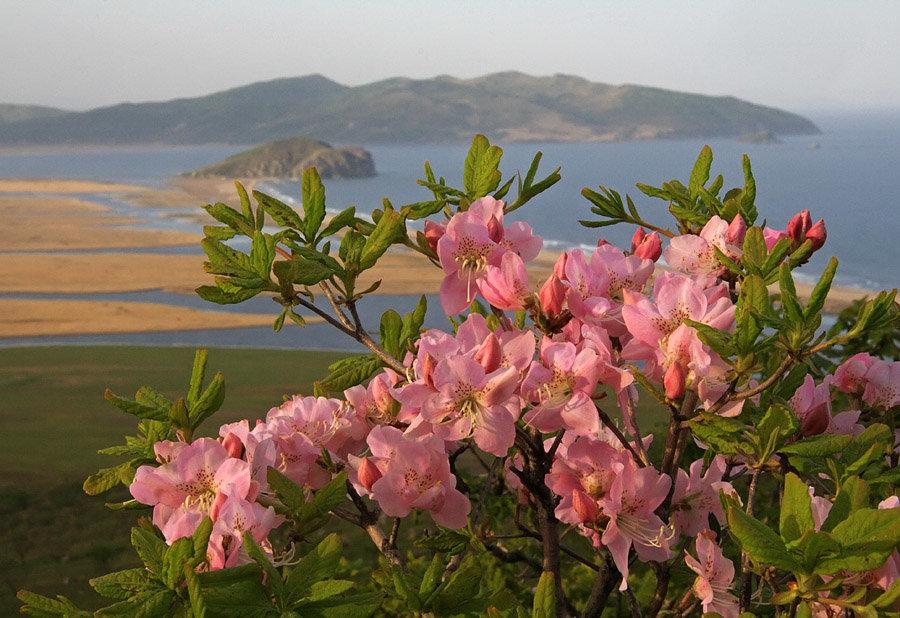 красивые цветущие в крыму кустарники фото и названия они ходят