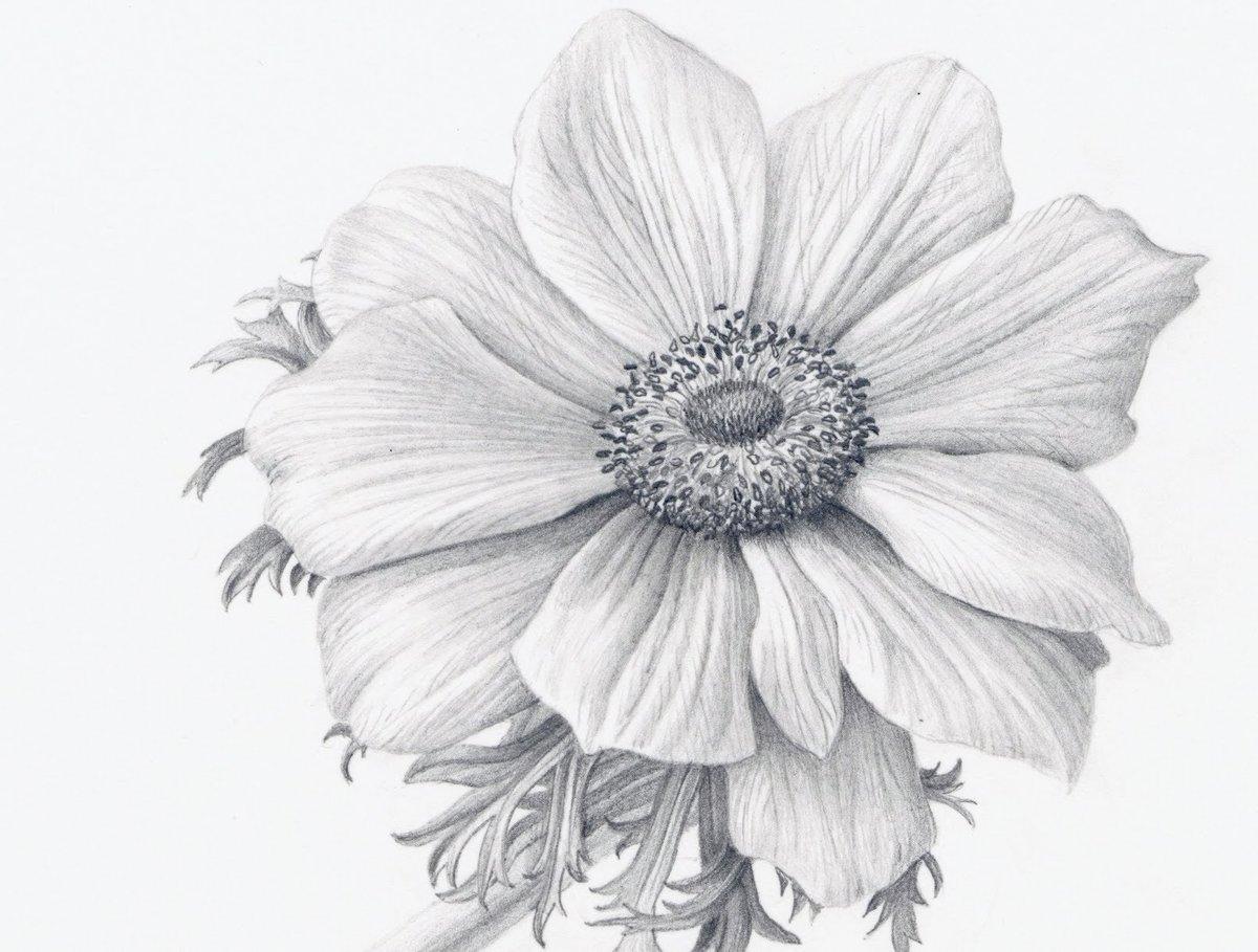 Нарисованные цветы картинки простые, февраля папу