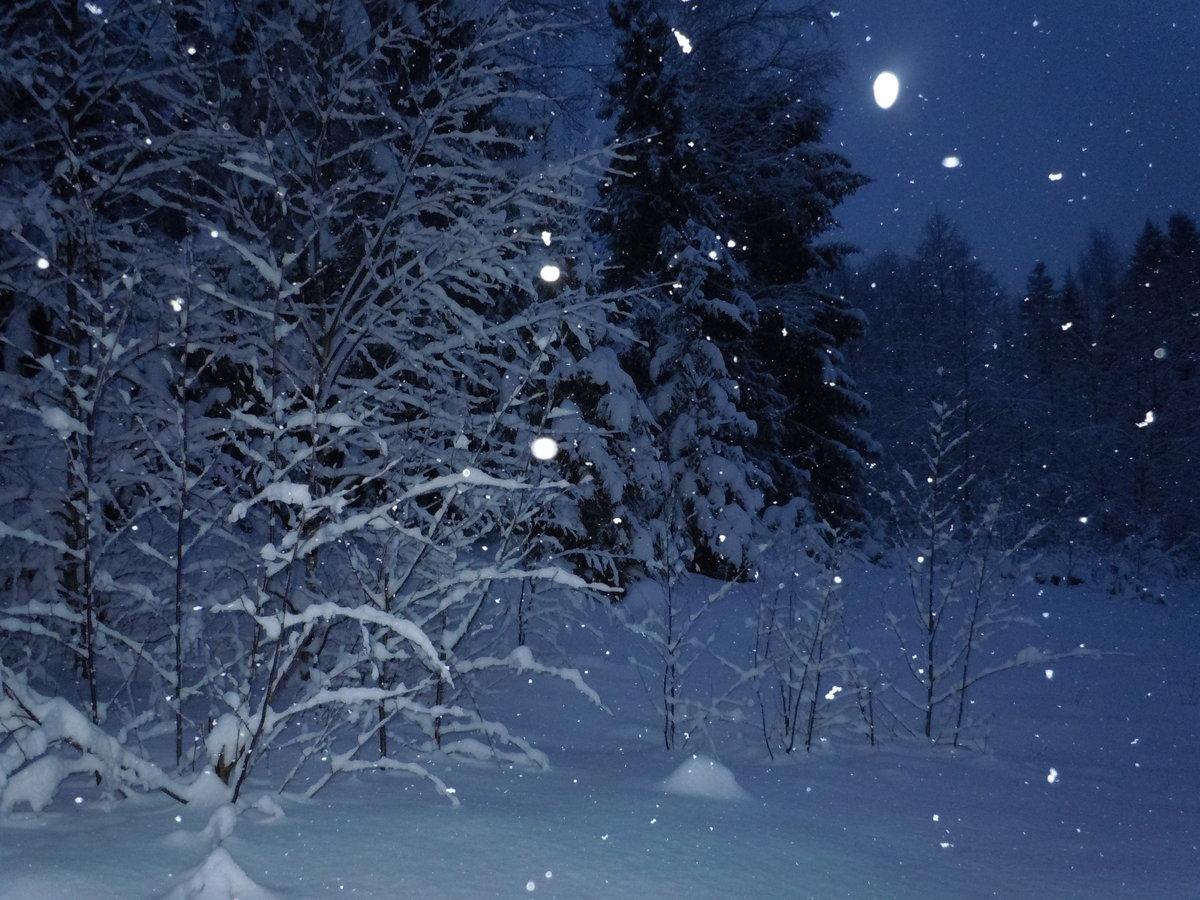 нашем сайте красивые картинки зимний лес ночью грузовые
