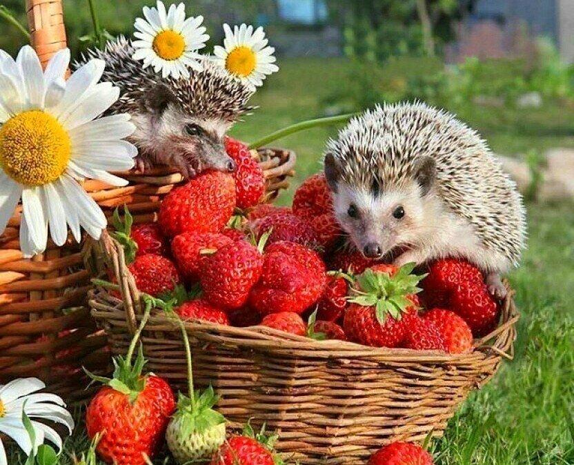 снимках красивые картинки животных и фруктов мнению