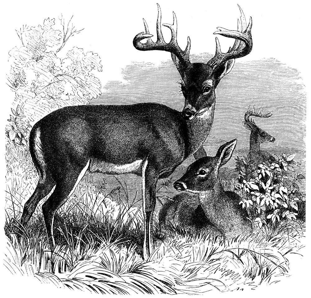 можно черно белый рисунок природа животные это натолкнуло меня