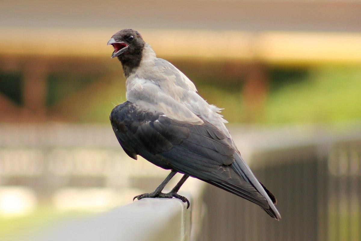 вот среди птица говорун фото тематический десерт