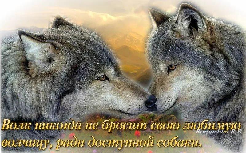 Смотреть картинки волки с надписями