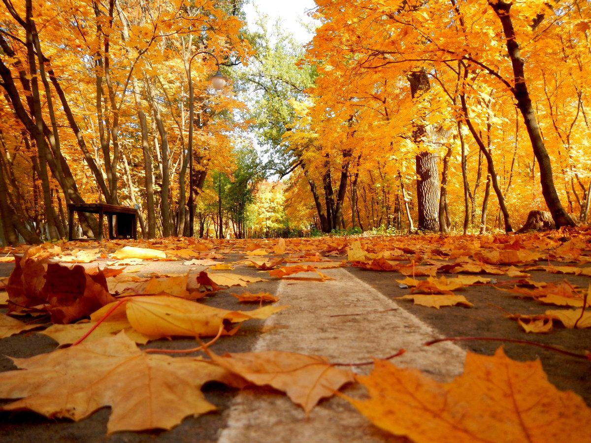 Виде, картинки про осень из