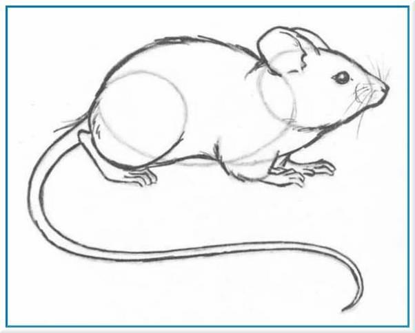 картинки как рисовать мышь поэтапно них