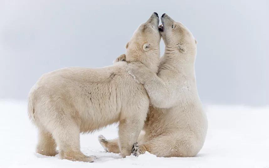 обнимающиеся медвежата картинки