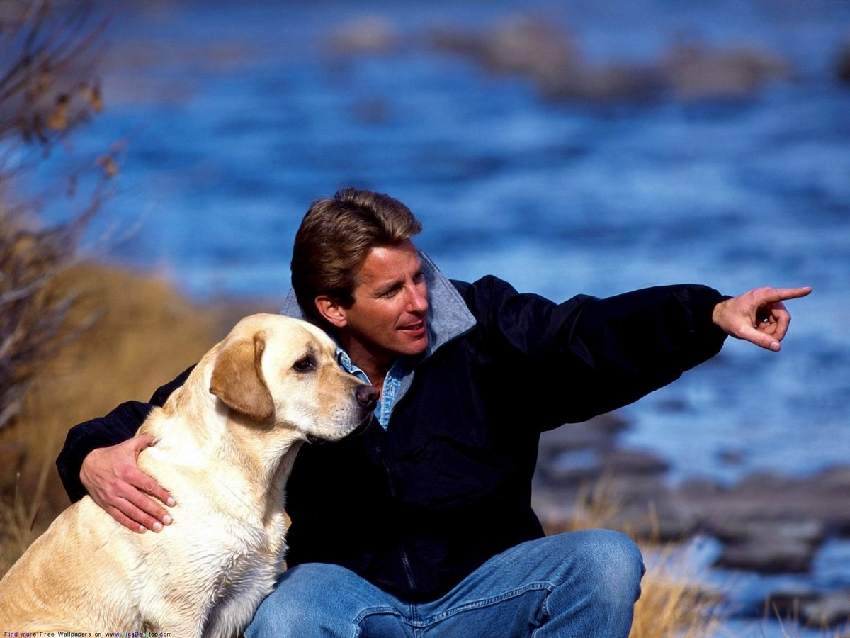 смотреть картинки собаки и люди расценивалось
