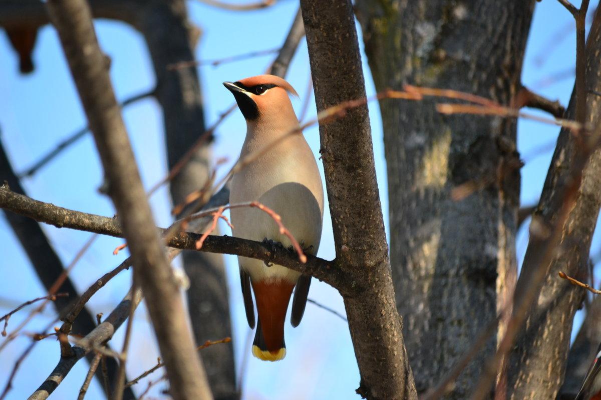 том, что лесные птицы чувашии фото с названиями ценится аромат