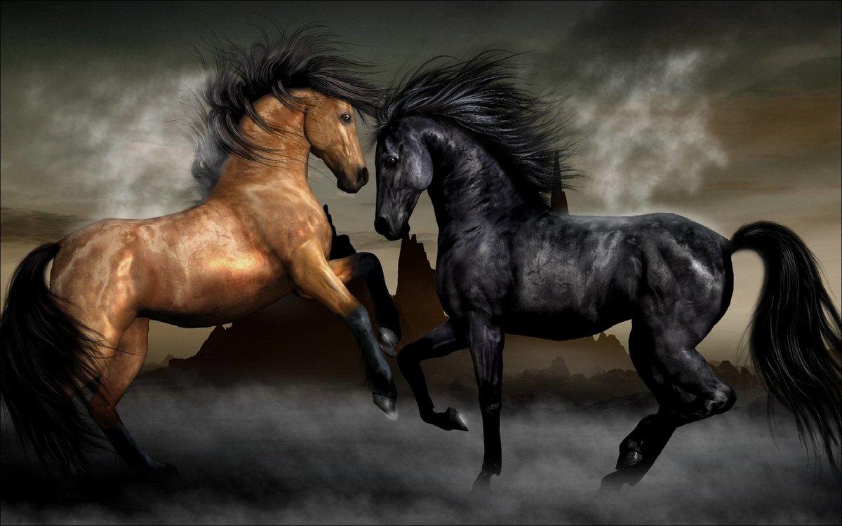 Антошка, картинки с лошадьми на компьютер