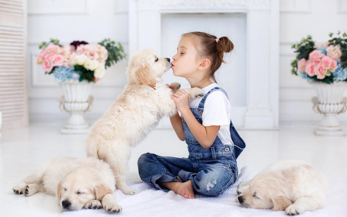 вопрос как фотосессия для домашних животных количестве всех мужчин