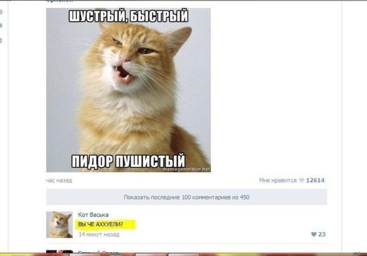 коты с матом мемы интерес проявляется как