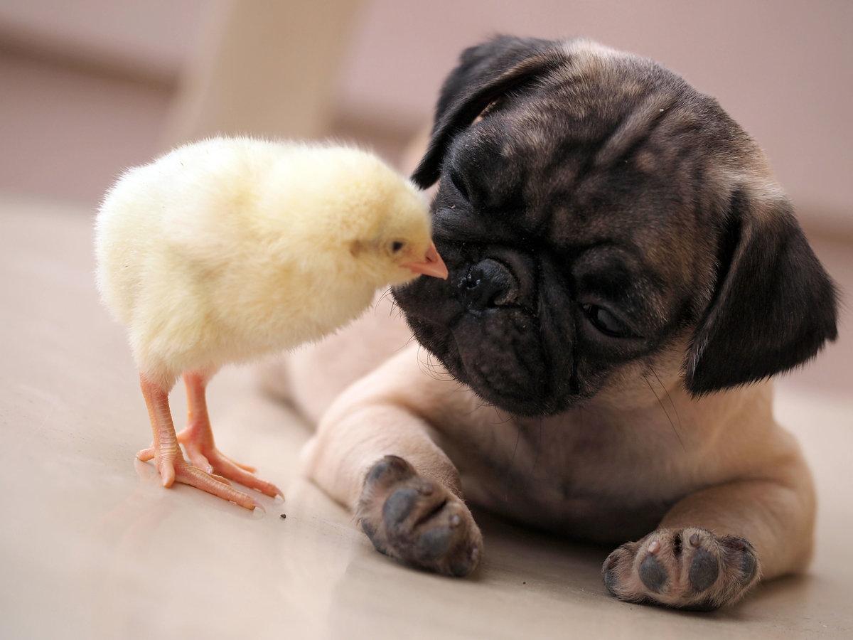 Самой лучшей, смешные милые картинки с животными