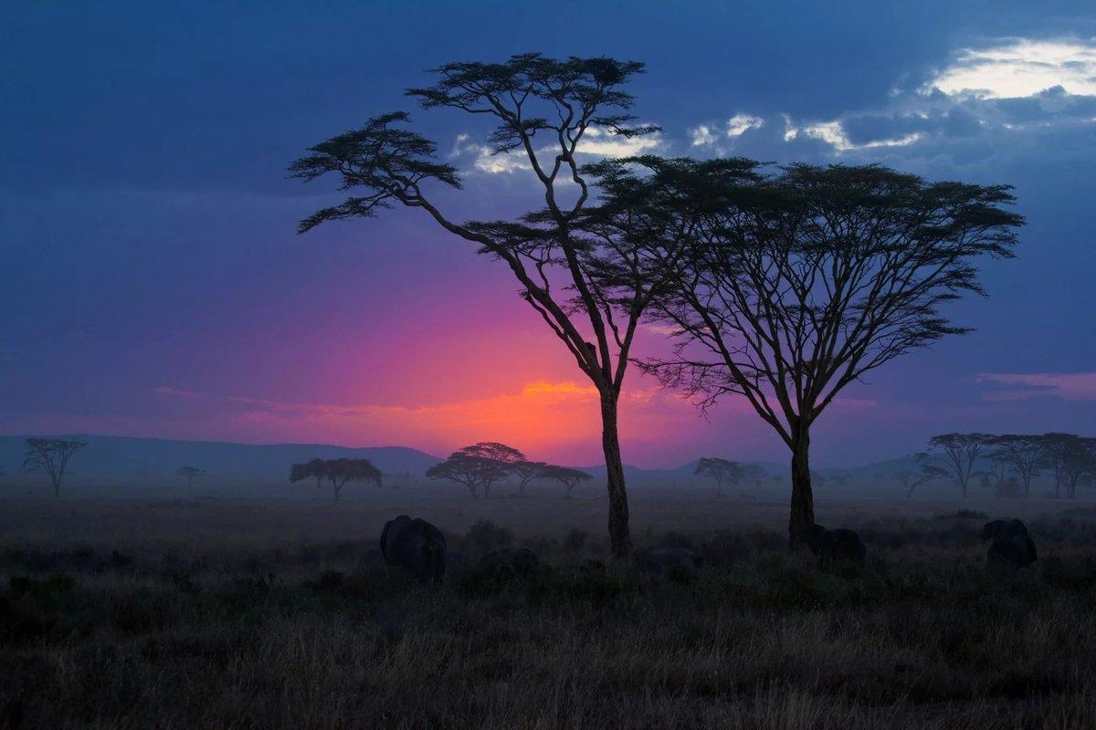 красивые картинки африка хотите надевать штаны