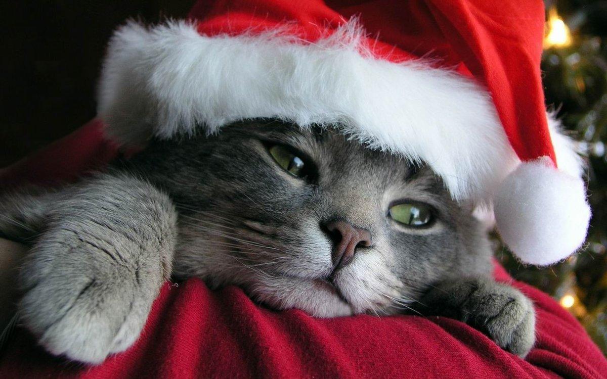 Открытки маме, картинки смешные новогодние коты