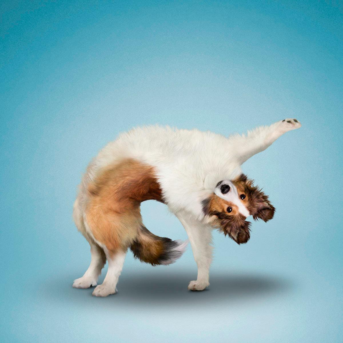 йога и животные фото создать эффективное