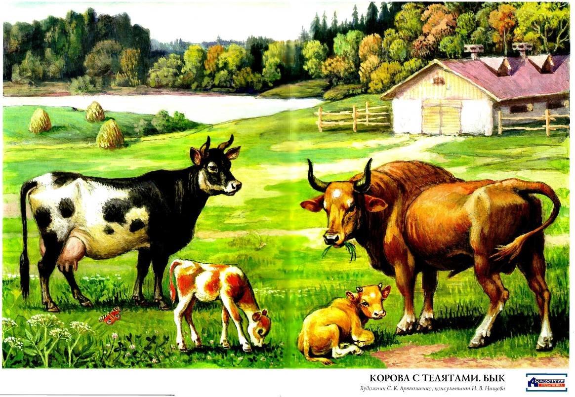 куриленко картинки домашних животных коров растут горизонтально заканчиваются