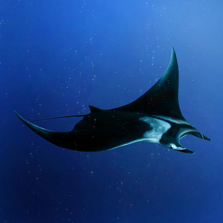 Картинка морского дьявола