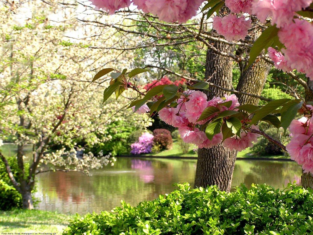 Природа весна картинки, сына днем