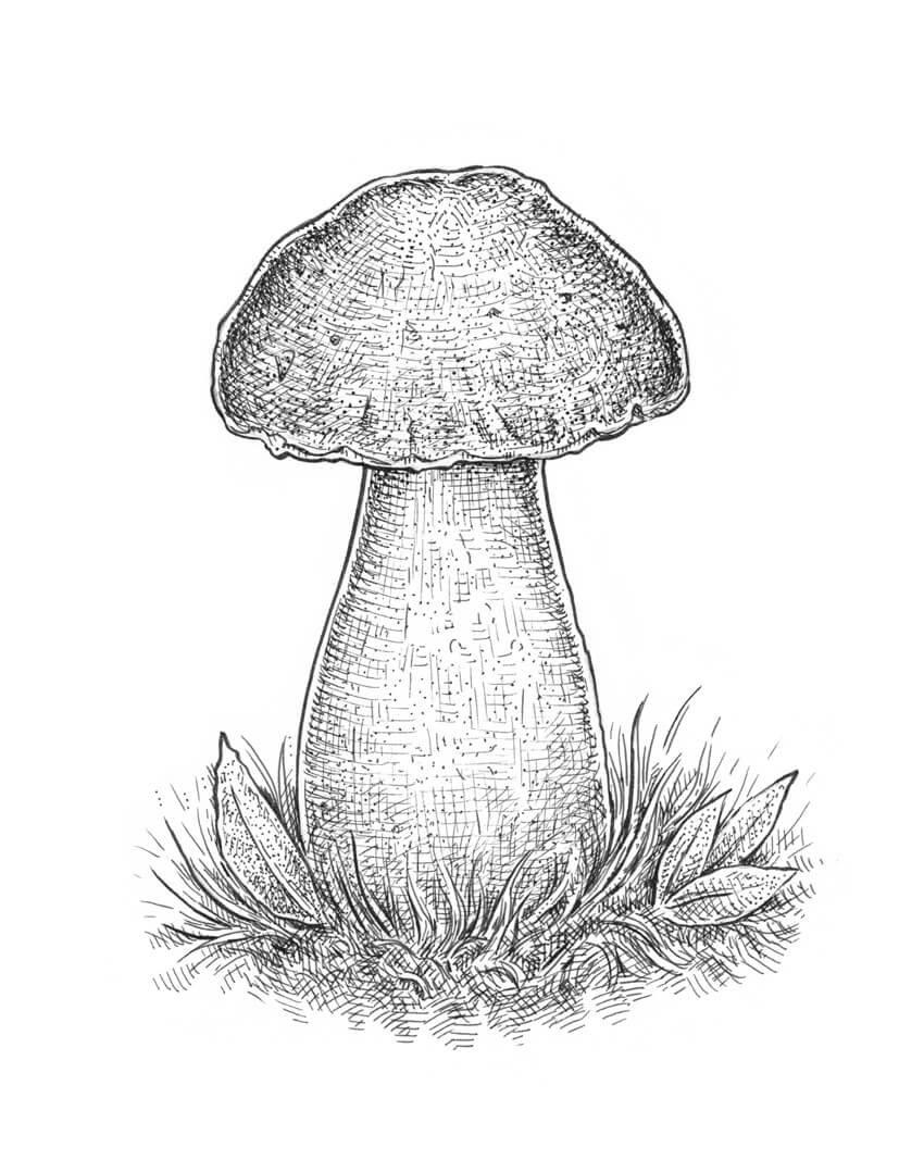 Картинка гриба для детей карандашом