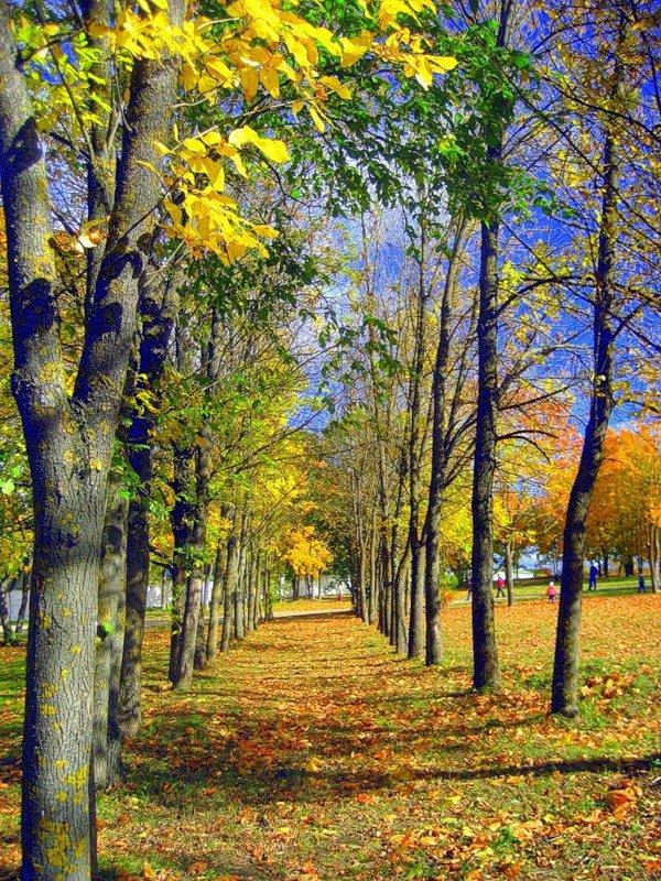 осень вертикальные картинки сентябрь том, как изменилась