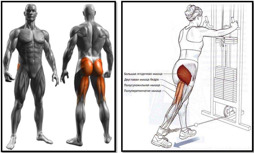 мышцы галифе ног в картинках ковбой картинки