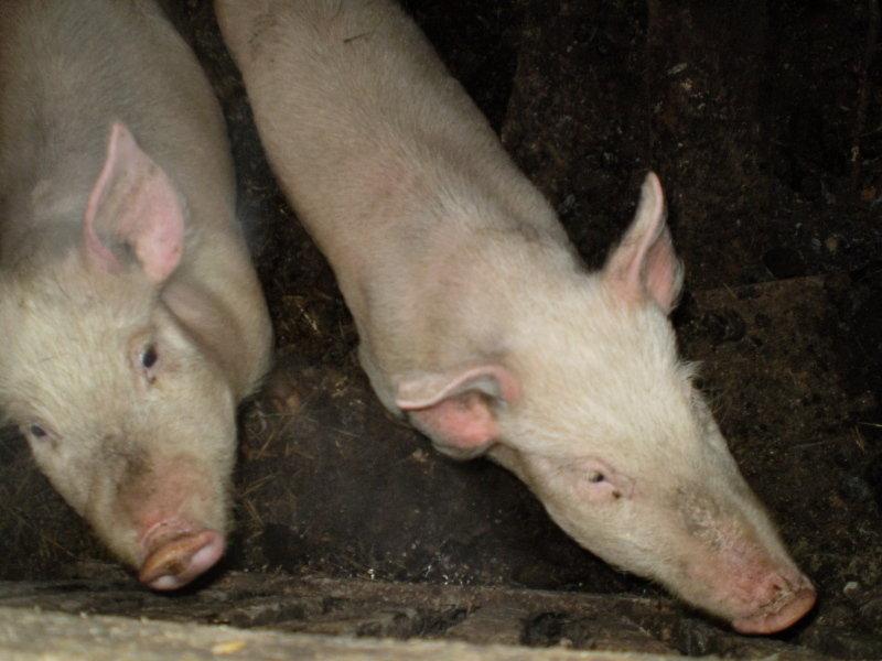 Гречка по купечески рецепт с фото со свининой недавняя запись