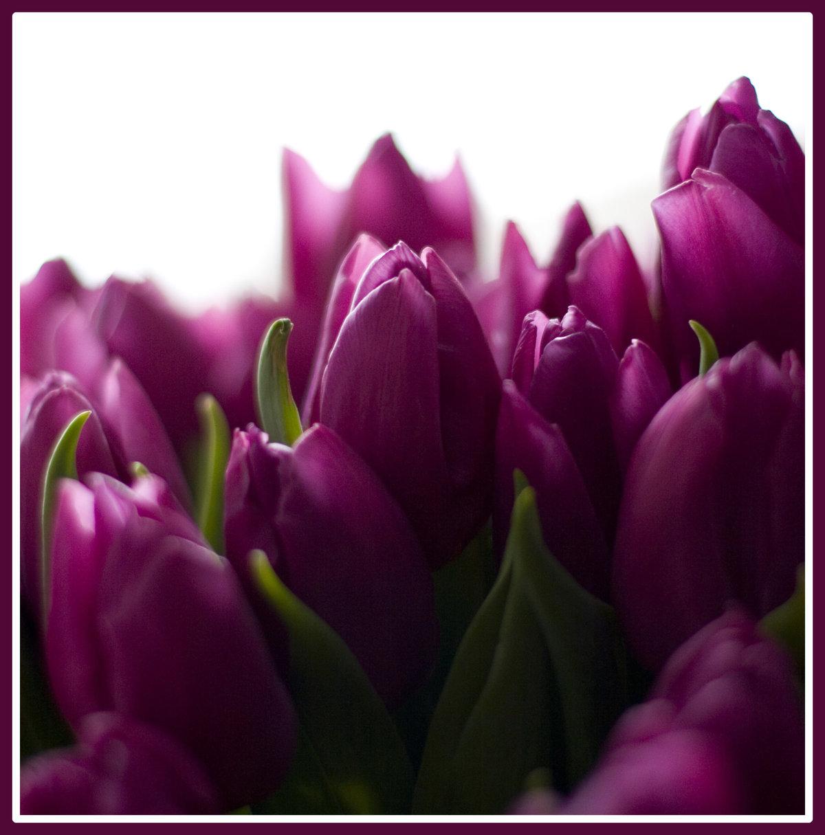 Зеленограде больших, хочу букет из фиолетовых тюльпанов и чтоб