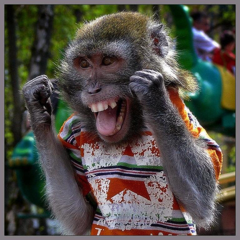 Прикольные картинки обезьян с надписью, открытки обезьян