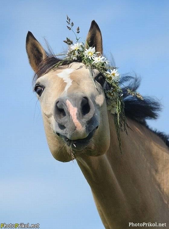 С днем рождения фото с лошадками