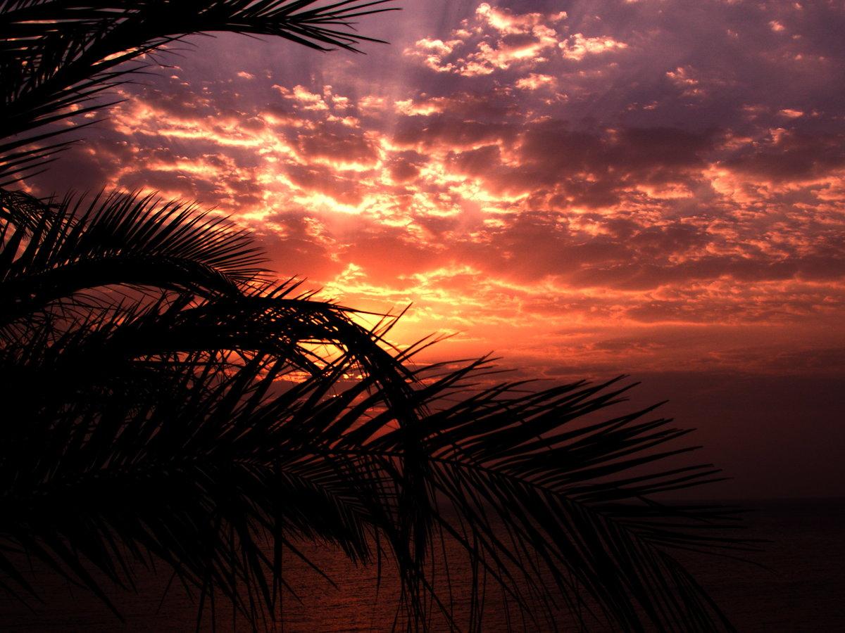 оказалась банальной картинки с рассветом и пальмами египте мне довелось