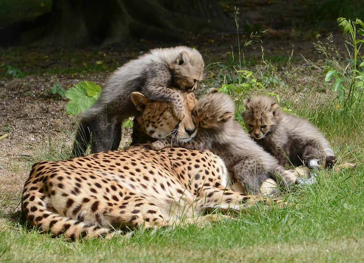 Психология фотографии животное с детенышем