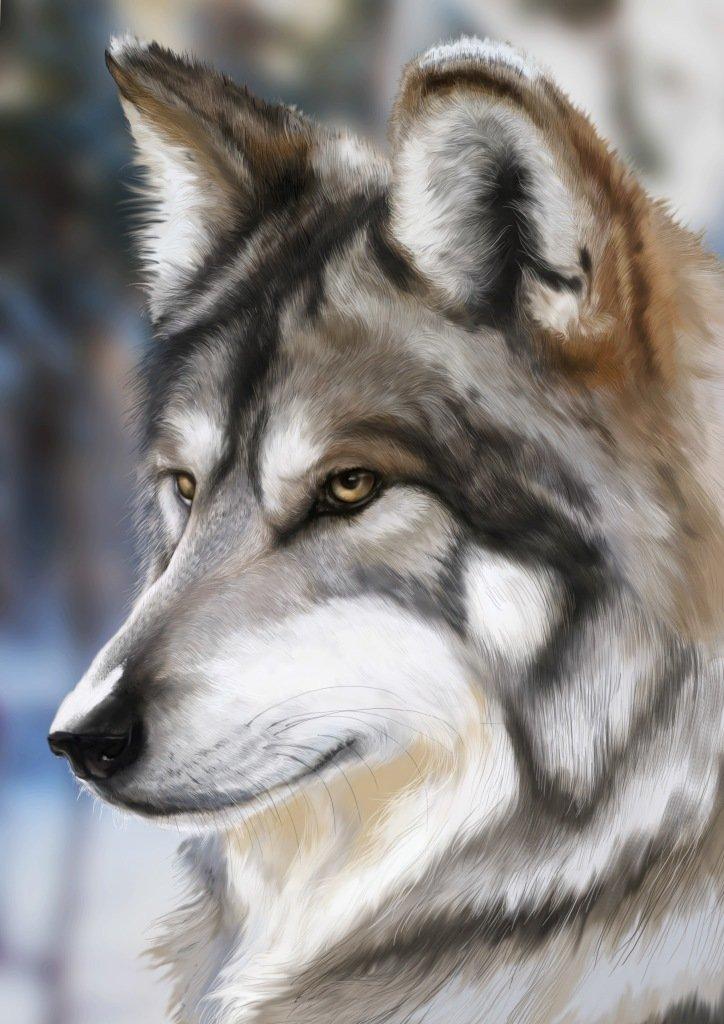если вам волки фото открытки рисунки все