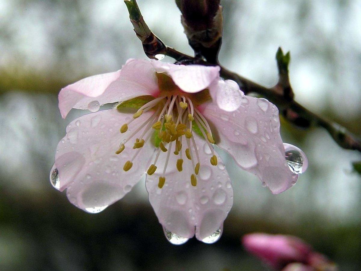 гифки красивые картинки цветение веточки гейтс покинул