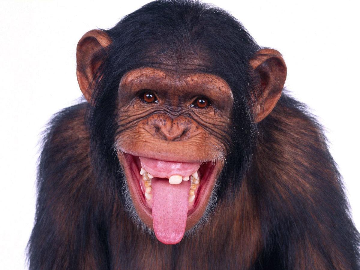 Картинка прикольная обезьяна, открытки новым