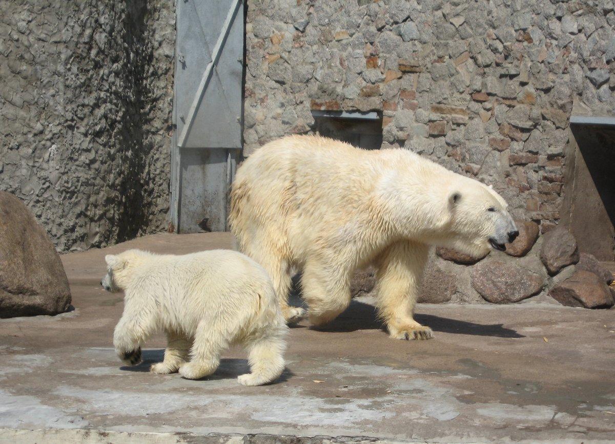 Зоопарк с животными картинки с надписями