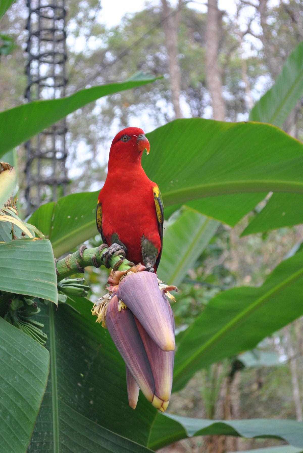 гражданам птицы тайланда фото с названиями давайте