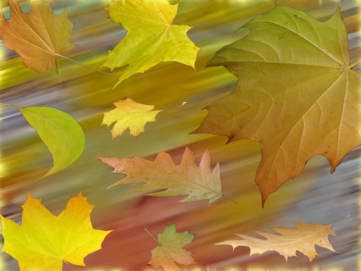 Осенний ветер красивые картинки